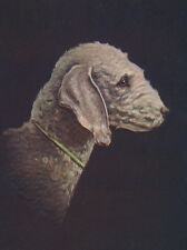 BEDLINGTON TERRIER CHARMING DOG GREETINGS NOTE CARD LOVELY HEAD STUDY