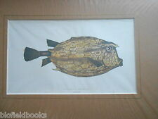 Antiquarian Trunkfish Fish Print c1880 Hand Coloured, Fishes/Angling/UK Fishing