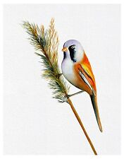 A4 Bearded Tit Bird Watercolour Signed Limited Edition Print Wildlife Gift