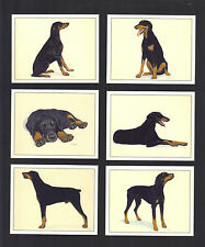 CIGARETTE/TRADE/CARDS. Imperial. Dogs. DOBERMANN. (1999). (Set of 6)