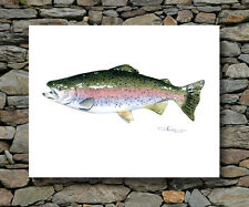 RAINBOW TROUT Painting Fly Fishing ART Print Signed by Artist DJR