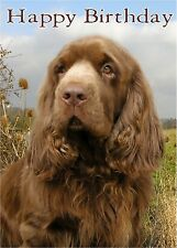 Sussex Spaniel Dog Design A6 Textured Birthday Card BDSUSSEX-2 by paws2print