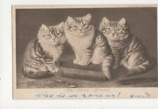 The Three Graces Cats 1903 Postcard 419a