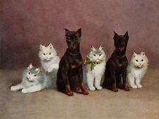 MINIATURE PINSCHER CHARMING DOG GREETINGS NOTE CARD TWO BEAUTIFUL DOGS & KITTENS