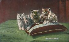 POSTCARD    ANIMALS   CATS     Best  Seats  Engaged