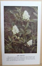circa 50's / 60's Collectors Card - Cassell's Nature Cards Series A # 28