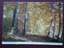 POSTCARD NORTHUMBERLAND BEECH TREES BY COQUET