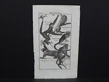 Buffon's Natural History, 1792 Monkeys, #2 Coatia, Marikina, Pinch, Ai