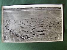 MOUTONS dans LA CRAU, MIRAMAS - 1958 - PHOTO AERIENNE 27 cm x 45 cm LAPIE