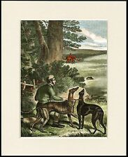 GREYHOUND MAN AND DOGS IN THE SLIPS COURSING OLD STYLE IMAGE DOG PRINT MOUNTED