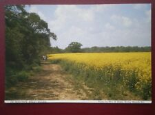 POSTCARD WARWICKSHIRE BINLEY WOODS - OIL SEED RAPE FIELDS