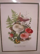 VINTAGE PRINT ANNE OPHELIA DOWDEN MATTED MUSHROOM FUNGUS PRINT SIGNED 1978