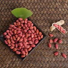 Four-grains Red Peanuts Seed 10 Seeds Arachis Hypogaea Herb Plant M007