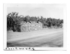 Fruit Crates & Orchard in Ione CA Photo 1931