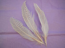 5pcs Stripped Hat Mount White Artificial feather Millinery DIY craft feather