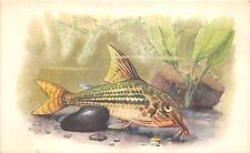 B27592 Poissons Fish Rusia