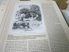 Kaiserreich Archiv 4 Gesellschaft 4675 Illustrierte: Die GArtenlaube