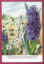 1947 Illustration~ ELSE BOSTELMANN Mediterranean Flowers~ Star-of-Bethlehem, etc
