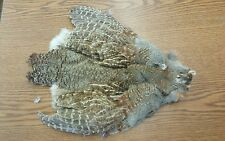 Natural Hungarian Partridge  Pelt Skin Body Tail Cape Feathers P5