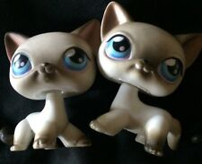 Littlest Pet Shop LPS SHORTHAIR SIAMESE CAT #5 #2Black & White w/ Blue Eyes RARE