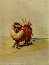 1914 Maud Earl~Pretty Pomeranian Dog Dogs ~ NEW Large Note Cards