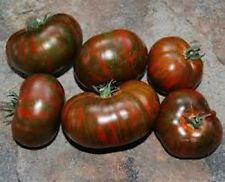 30 CHOCOLATE STRIPES TOMATO  2017 (all non-gmo heirloom vegetable seeds!)