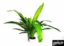 Potted Indoor Outdoor Artificial Large 90cm UV Resistant Plastic Aloe Plant Tree