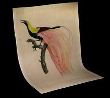[ORNITHOLOGIE OISEAUX] BARRABAND - Le Petit oiseau de paradis émeraude n°4. 1801
