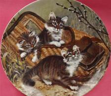 GONE FISHING: MAINE COONS CAT KITTEN PLATE AMY BRACKENBURY + CERT CAT TALES