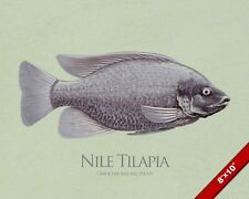 THE NILE MANGO TILAPIA FISH MIDDLE EAST AFRICAN PAINTING REAL CANVASART PRINT