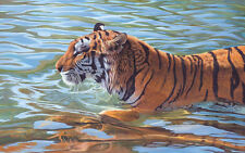 TIGER ART PRINT - Afternoon Swim by Mickey Flodin 26x36 African Wildlife Poster