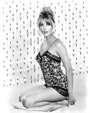1960-1969 SHARON TATE b/w glamour classic photo (Celebrities & Musicians)