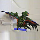 Pet Birds Suction Cup Toys Paw Grinding Stand Bath Shower Perches Parrot Budgie