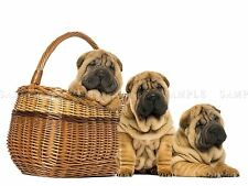 PHOTO COMPOSITION SHARPEI PUPPIES WICKER BASKET CUTE COOL POSTER PRINT BMP10406