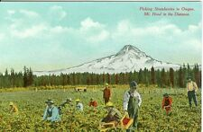 Mt. Hood, OR Strawberry Fields Forever, Pickers picking