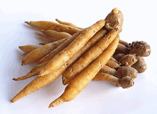 BOESENBERGIA PANDURATA FINGERROOT TUBE CHINESS GINGER SPICE FOOD COOK MEDICINE