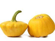 10 Graines Courge Patisson Jaune BIO seeds plantes légumes ancien rare potager
