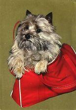 Alte Postkarte - Hund in der Tasche