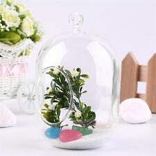 Glass Vase Hanging Terrarium Succulents Plant Landscape Home Decor Gift QT