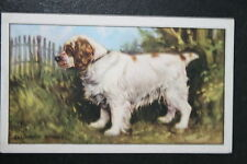 CLUMBER SPANIEL   Original 1930's Vintage Illustrated Card  VGC