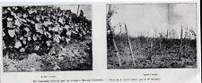 1903  --  UN VIGNOBLE DETRUIT PAR UN ORAGE A BOURG   GIRONDE   3K539