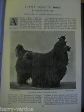 Funny Dogs Corded Poodle Dingo Chow Spaniel Sledge Rare Old Dog Article 1897