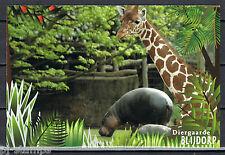 Blijdorp 150 jaar voorgefrankeerde briefkaart - postcard -nijlpaard-hippopotamus