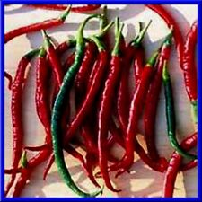 Mexican Finger Hots Pepper Seeds! Plants get loaded with peppers! COMB. S/H!