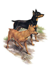 MINIATURE PINSCHER CHARMING DOG GREETINGS NOTE CARD TWO BEAUTIFUL STANDING DOGS