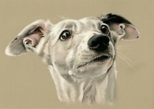 Whippet     ***   Windhund    *   A4  Limited  Print  #  217