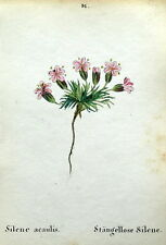 SILENE ACAULIS Alpine Flower Weber Original Antique Botanical Print 1872