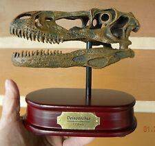 Dinosaur Deinonychus Skull model with stand and brass  name plate jurassic park