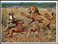 RHODESIAN RIDGEBACK DOGS AND LION GREAT DOG PRINT POSTER