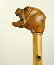 Canne à pommeau de bois sculpté d'une tête de chien bulldog dog carved wood cane